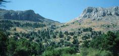 Un oasis de bosques en el Parque Natural Sierra-María Los Vélez (Almería)