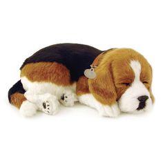 Beagle Uyuyan Köpek | Perfect Petzzz Sevimli yavru köpek tıpkı gerçek bir köpek gibi nefes alıp veriyor ve yumuşak yatağında usluca uyumaya devam ediyor. Arada sırada fırçası ile onu taramanız yeterli.  Uyku minderi, isimlikli tasması, fırça, evlat edinme sertifikası kutusunda yer alıyor.   1 adet D alkalin pil ile yaklaşık dört ay çalışır. (Pil dahildir)  ASTM Uluslararası F 963 ve CPSIA Oyuncak Güvenlik Gereksinimleri'ne uygun olarak üretilmiştir.
