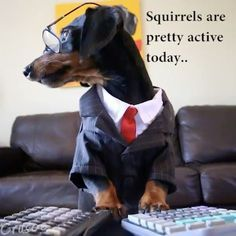 """Crusoe the celebrity dachshund — """"I may be an accountant of the highest..."""