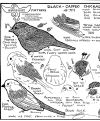 free printable wood carving patterns | Wood Carving Patterns for Song Birds woodcarvers