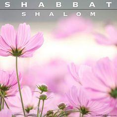 cosmos flowers by Natthawut Punyosaeng on Sabbath Rest, Happy Sabbath, Sabbath Day, Shabbat Shalom Images, Sabbath Quotes, Good Shabbos, Saturday Sabbath, Messianic Judaism, Cosmos Flowers