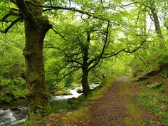 Bosque de Muniellos. Reserva de la Biosfera. Asturias