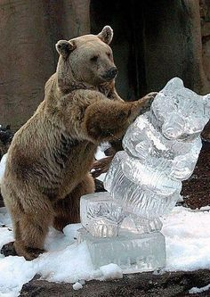 Bears are so high maintenance. Just so, so cute! Animals And Pets, Funny Animals, Cute Animals, Wild Animals, Animal Funnies, Animal Pictures, Funny Pictures, Funny Pix, Hilarious