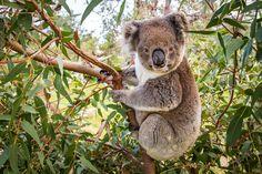 10 gute Gründe für eine Reise nach Australien