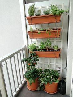Čerstvá zelenina z truhlíků na balkoně