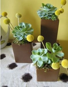 I think it could be really fun to do this in your colors! We can paint the vases coral or use charcoal grey vases, the mint succulents and a pop of coral.