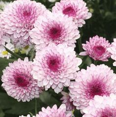 Photo: Darren Swim   thisoldhouse.com   from 15 Fast-Growing Flowers for a Cutting Garden