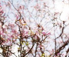 Spring! <3