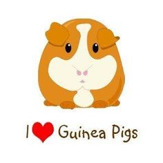 But I love my guinea pig the most!!!