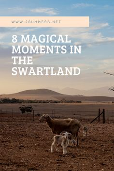 8 magical moments in the Swartland, a picturesque wine region about an hour northwest of Cape Town in South Africa. Cape Town, North West, South Africa, Southern, In This Moment, Wine, Green, Travel, Africa