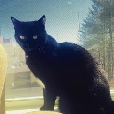 New #kitty friend Porter soaking up some sun! #petsofinstagram #petsofinsta #petsofig #blackcat #blackcatsofinstagram #blackcatsofig #petsitter #petsitting #cambma #cambridgemass #igerscambma #catsitter #catsitting #petcare #dailycat #catoftheday #catsofig #catsofinsta #catsofworld #catsofinstagram #meow #ilovecats #ilovemyjob #catlady by thoughtfulpaws March 30 2016 at 01:32PM
