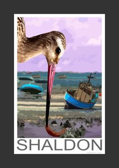 Bar-tailed Godwit at Shaldon, Devon (Art Print)