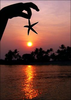 Little Starfish Sunset