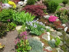 rock garden plants | Plants for Rock Gardens, Rock Flower Garden, Perennial Plants