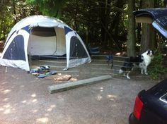 Car camping with dogs, Clallam County, Washington