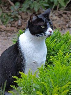 Cats in Gardens