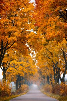 Tree-lined avenue in autumn (Poland) by Piotr Skubisz on 500px
