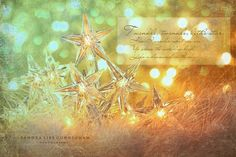 Star holiday lights with sparkle background, via Flickr.
