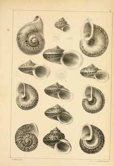 Shell print. by BioDivLibrary, via Flickr
