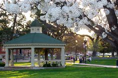 Downtown Paso Robles park....where I used to live on the Central Coast