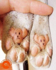 Happy Paws!