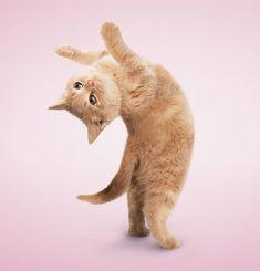 Jus stretchin'