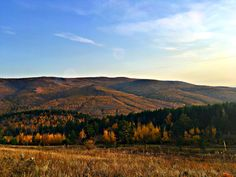 steppe grass forest autumn beauty of Russia Eurasian Steppe, Grass, Russia, Landscapes, Autumn, Mountains, Places, Nature, Travel