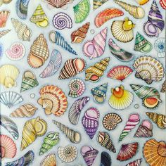 #colors #sealife #shells #SAcolourist #colouring #colourist #colouringaddict…
