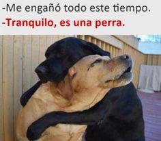 A Firulais le pusieron los cuernos :'c Para más imágenes graciosas visita: https://www.Huevadas.net #meme #humor #chistes #viral #amor #huevadasnet