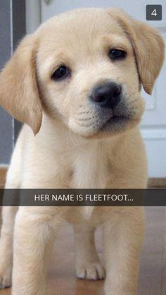 Fleetfoot as puppy bae