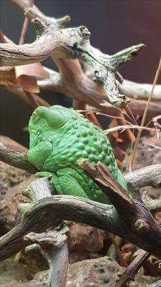 Aquarium Photos, Animals, Animales, Animaux, Animal, Animais
