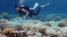 Coral bleaching has hit two-thirds of Australia's Great Barrier Reef within two years, surveys show.