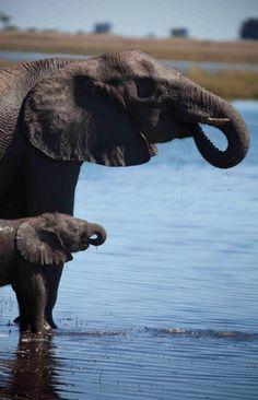 Elephant, Botswana BelAfrique - Your Personal Travel Planner www.belafrique.co.za