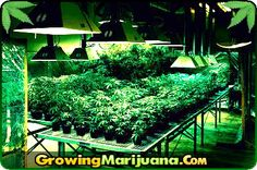Hydroponic System Preservation  http://www.growingmarijuana.com/hydroponic-preservation.php