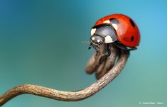 Astonishing Insect Life Photography
