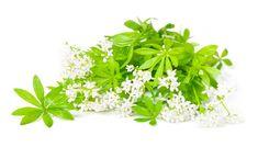 Waldmeister sammeln, beruhigend, gegen Schlaflosigkeit, herzstärkend, fördert die Verdauung, blutreinigend, krampflösend, gegen Menstruationsbeschwerden, schweisstreibend, und schmerzstillend.  Maitrank