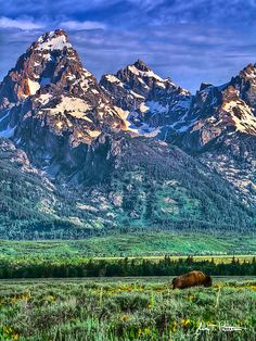 """Where Buffalos Roam"" - Grand Teton National Park, near Jackson Hole, Wyoming. Photo by Jerry T. Grand Teton National Park, Yellowstone National Park, National Parks, Bergen, West Coast Road Trip, The Great Outdoors, Places To See, Beautiful Places, Beautiful Scenery"