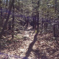 William Hofferlein Trail in the afternoon.