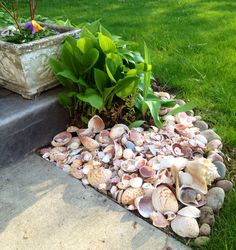 I was wondering what to do with all the seashells we had collected from our trips to the ocean. I live in the Midwest so it's fun to put them in my garden and look at them, and remember. Seaside Garden, Coastal Gardens, Beach Gardens, Farm Gardens, Outdoor Gardens, Outdoor Beach Decor, Backyard Beach, Beach Crafts, Pool Landscaping