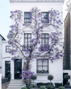 Maybe you don't need to add shutters and have 3 colors for your exterior - MAYBE you just need a GORGEOUS wall-climbing flower like WISTERIA! House front inspiration, major curb appeal ideas, how to make your house POP from the rest.