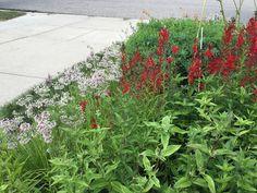 Rain Garden, Gardens, Plants, Outdoor Gardens, Plant, Garden, House Gardens, Planets