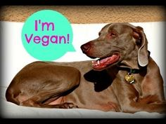 1000 images about vegan pets on pinterest pumpkin dog