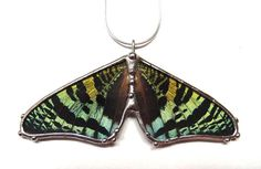 Green and Black Sunset Moth Necklace  Real Butterfly by neile