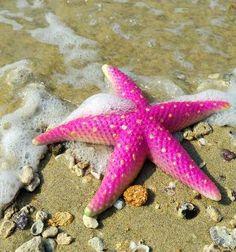 Neon pink starfish