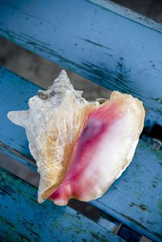 beautiful contrast...love the cold blue/white bg vs. the hot pink of the conch...