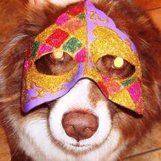 Sheba celebrating Mardi Gras