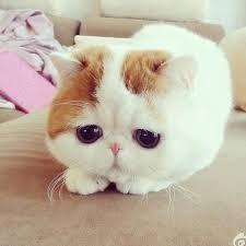 super schattige dieren foto - Google zoeken