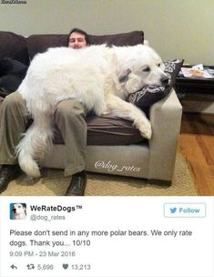 20 Hilarious Responses From 'We Rate Dogs' After People Failed to Send Dog Photos Cute Funny Animals, Funny Animal Pictures, Dog Pictures, Funny Dogs, Dog Photos, Funny Bears, Cute Puppies, Cute Dogs, Dogs And Puppies