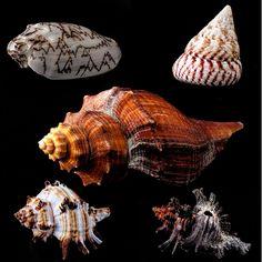 Ваша коллекция морских раковин может быть хорошей отправной точкой, чтобы попытаться фотографировать коллекцию