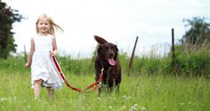 This is a simple technique for walking your Labrador on a loose leash. Everywhere you go, you will see dogs on leads. Some of those dogs are trotting happily along at their owner's side. Others have a rather different style. You will see their owners, hurrying along with one arm stretched out in front a …